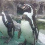 「犬吠埼マリンパーク」は、魚だけじゃなくて景色が綺麗な水族館でした。