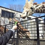 宇都宮動物園の口コミ!キリンに餌やりが迫力!遊園地もついてて楽しいところでした♪