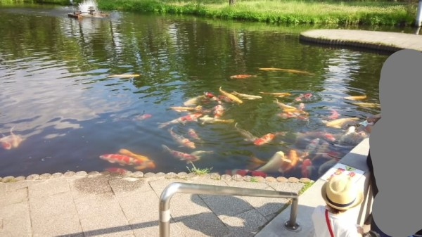 さいたま水族館のニシキゴイ池