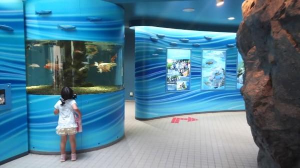 さいたま水族館の本館の中