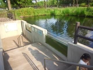 さいたま水族館のチョウザメ池の横の階段
