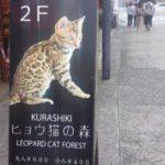 ヒョウ猫の森倉敷の口コミ!子供と猫カフェを楽しんできました♪
