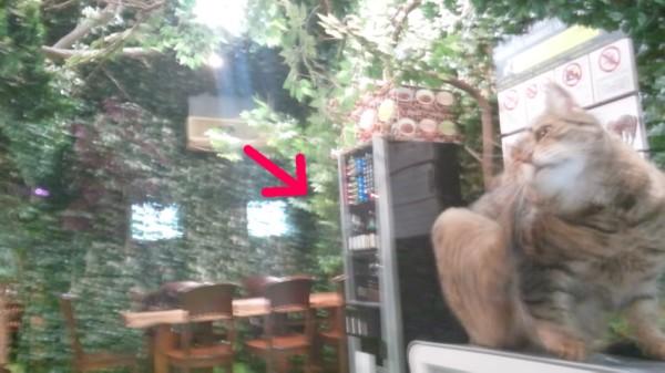 倉敷ヒョウ猫の森のドリンクマシン