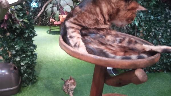 ヒョウ猫の森の猫ちゃん