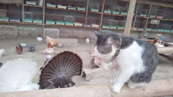 渋川動物園の猫さんとか