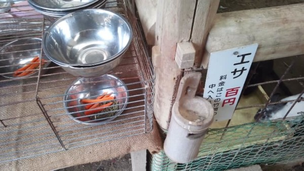 渋川動物園のエサやり