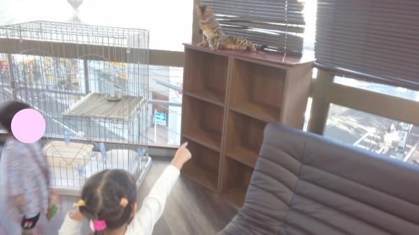 ねこランドのねこを指さす3歳児