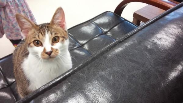 ねこランドの猫ちゃん