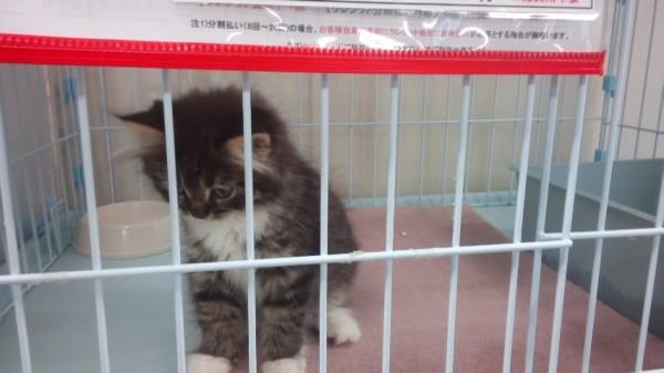 ねこランドのケージの中の子猫