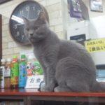 ねこランドは子猫とも触れ合える、子連れで楽しめる猫カフェでした。