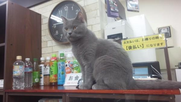 ねこランドのドリンク(ペットボトル)の前にいる猫