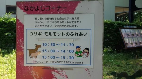 埼玉県東松山市こども動物自然公園 ふれあいコーナー 時間