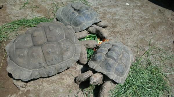 埼玉県東松山市こども動物自然公園 カメ
