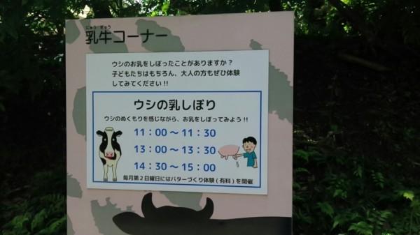 埼玉県東松山市こども動物自然公園 牛の乳しぼり時間帯