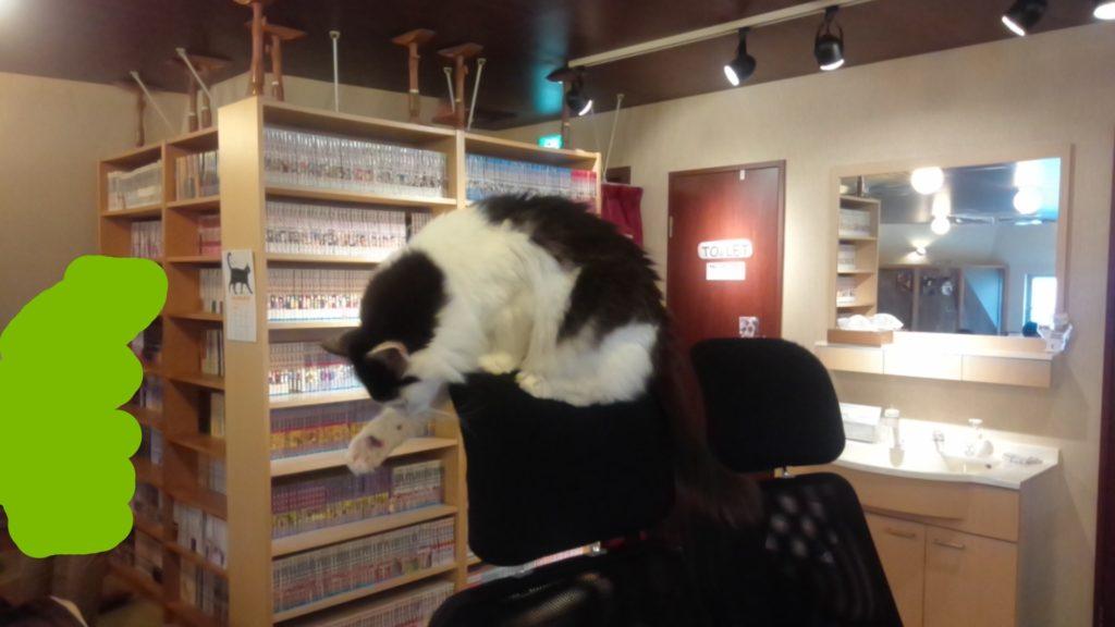 池袋の猫カフェ299
