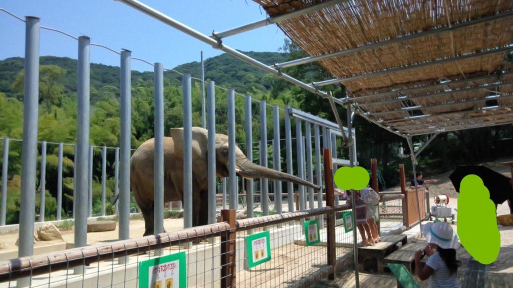 しろとり動物園 ゾウ