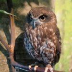 倉敷フクロウの森の口コミレポート!可愛いフクロウを触れる所でした♪