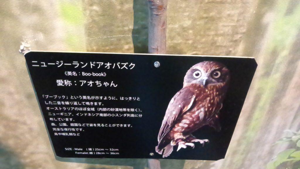 フクロウの森 倉敷