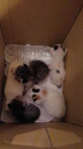 拾った子猫たち